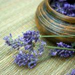 Essential Oils: Lavender