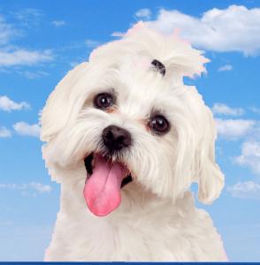 Doggy Breath