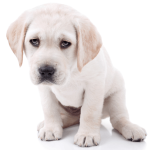 11 Puppy Sad