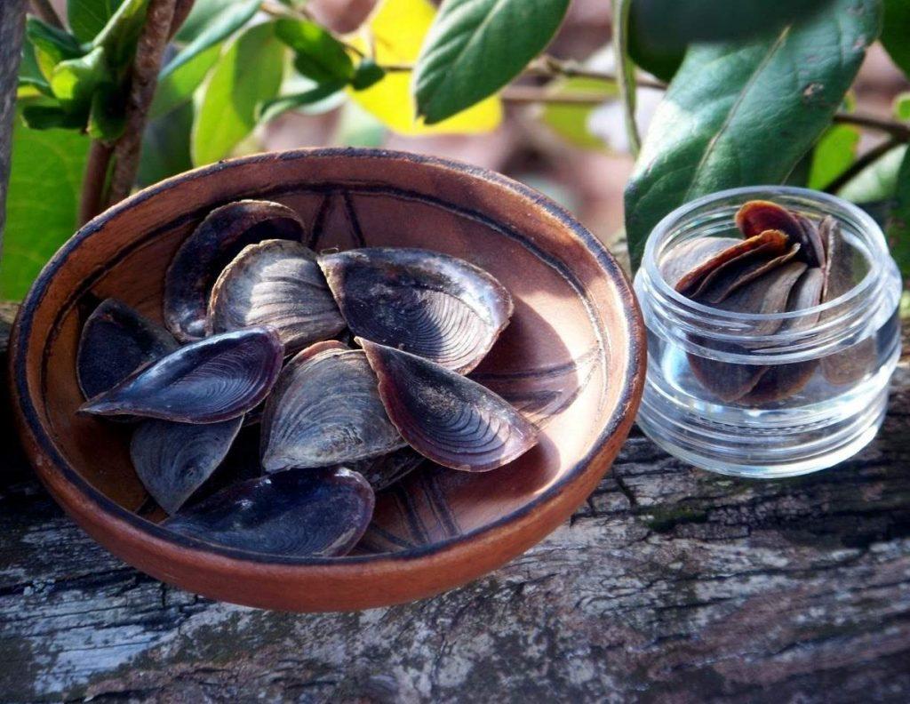 onycha-essential-oil-properties